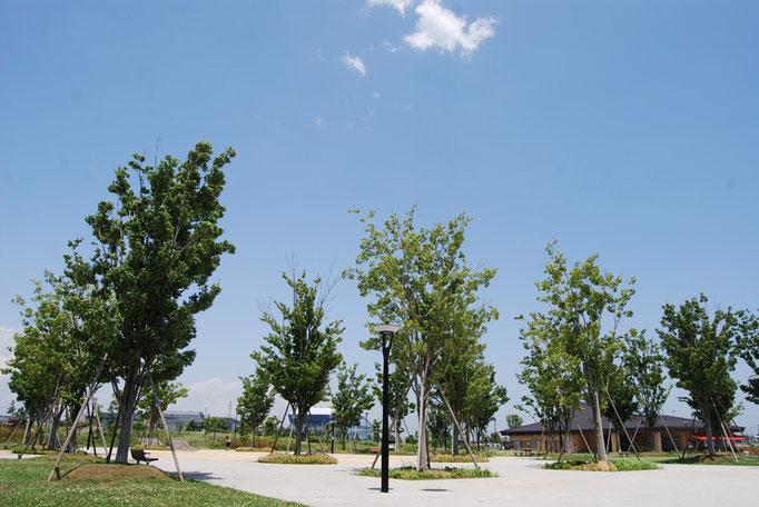 プロムナード沿いのケヤキ広場では、お散歩を一休みして座れるベンチや、夏の燦燦とした日差しをさえぎるケヤキ、伸び伸びと水遊びができるジャブジャブ池があります。