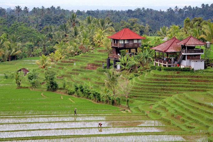 Bali Gallery
