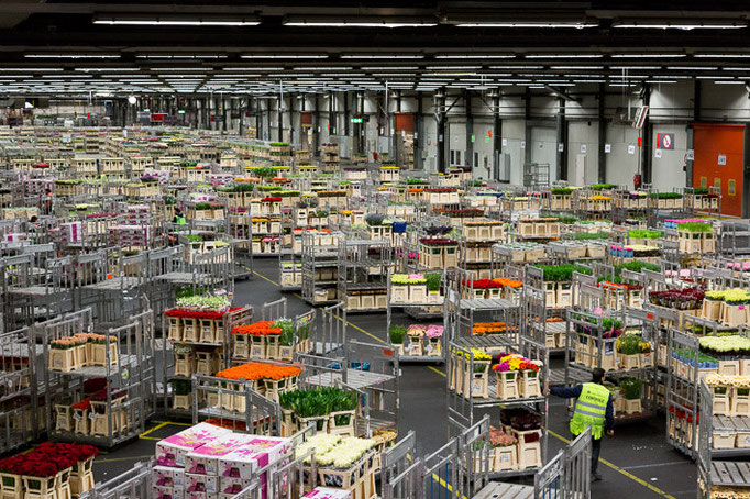 Pays-Bas - Aalsmeer - Marché international FloraHolland