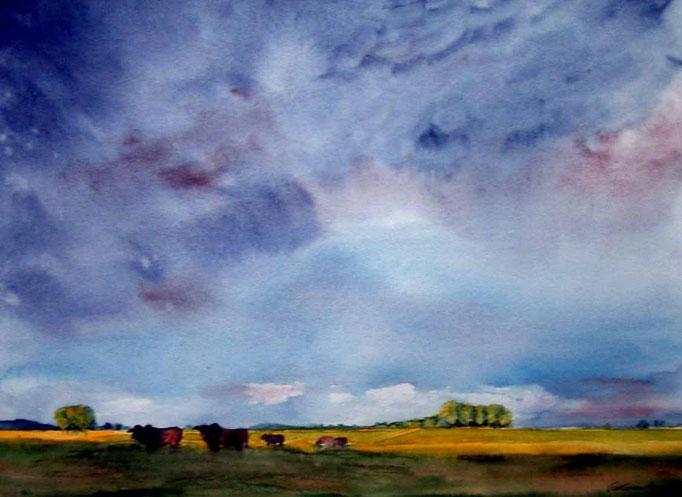 Korn und Gras 40x50cm, (c)D.Saul 2011,Pampa