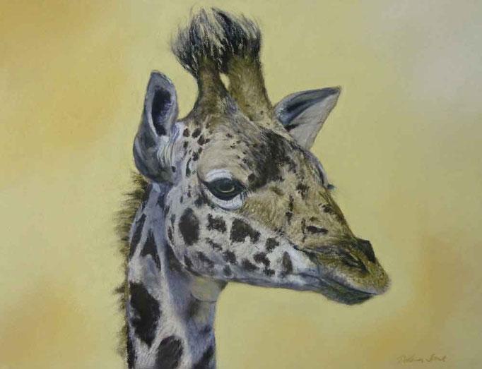 Grant-Giraffe, Pastell 40x50cm,(c)D.Saul 2013,Ref.Foto:(c)M.Walti,Schweiz