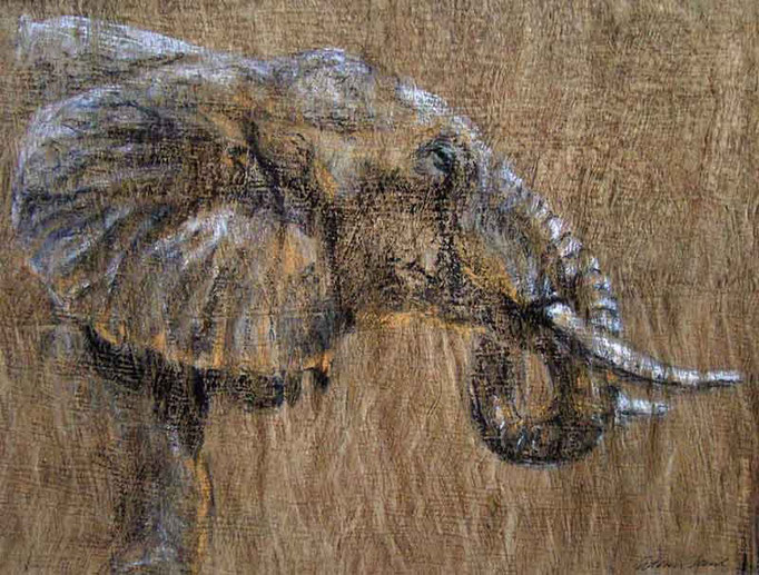 Shambe,Pastell auf Baumrinde 45x65cm,(c)D.Saul 2011,Elefant