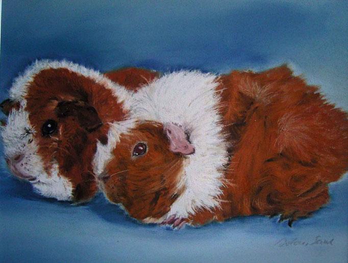 """""""Lilly und Nico""""Rosettenmeerschweinchen,Pastell 24x32cm,(c)D.Saul  unverkäuflich 2011"""