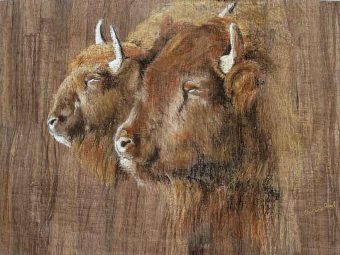 Bisons im Sonnenlicht,Pastell auf Papyrus 41x55cm,(c)D.Saul 9.2012