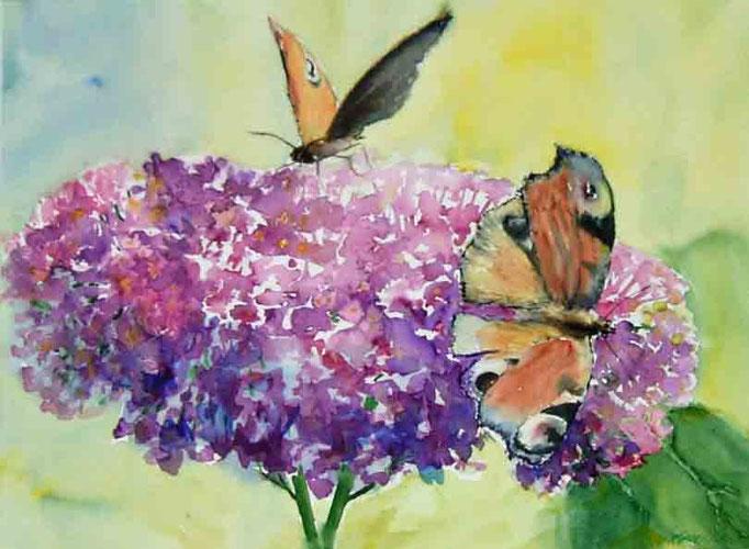 Duft des Sommers 40x50cm,(c)D.Saul 2011,Hortensien-Schmetterling