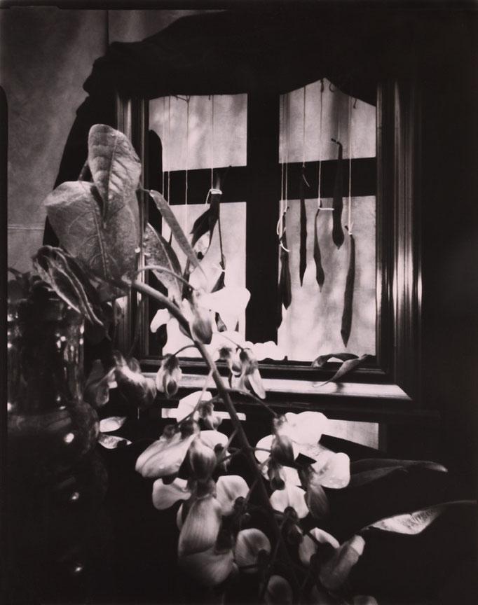 """""""Nature silencieuse à la glycine"""", Sténopé, Positif direct sur Imago, Révélation Caffenol, Épreuve unique, 4x5 inches, encadrement 30x30cm, 1/1, 2015, ©Annick Maroussy Amy"""