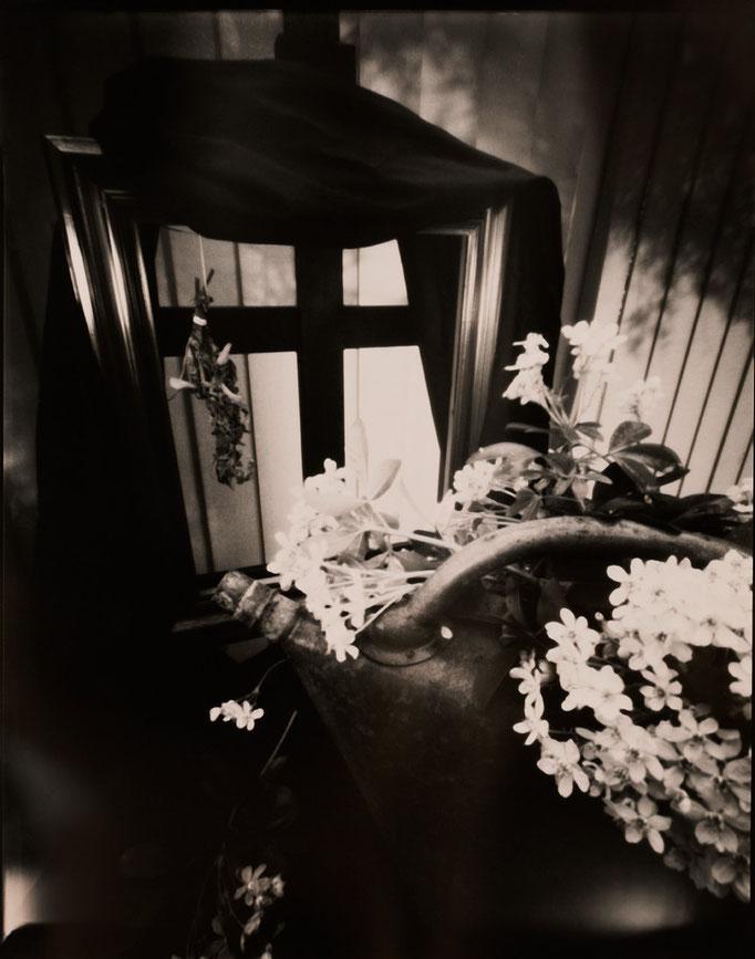 """""""Nature silencieuse à l'arrosoir"""", Sténopé, Positif direct sur Imago, Révélation Caffenol, Épreuve unique, 4x5 inches, encadrement 30x30cm, 1/1, 2015, ©Annick Maroussy Amy"""