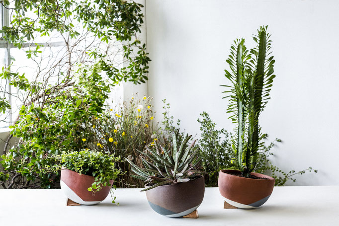 The Lazy Season is a hemispherical self-watering pot by The Fortynine Studio