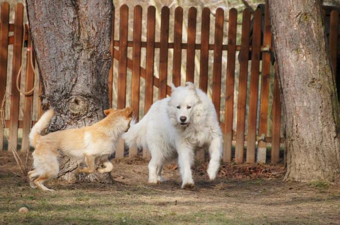 Sunny spielt mit Leo