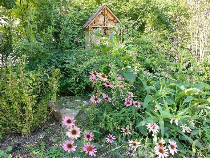 Die Insekten haben genug zu mampfen direkt vor der Haustüre.
