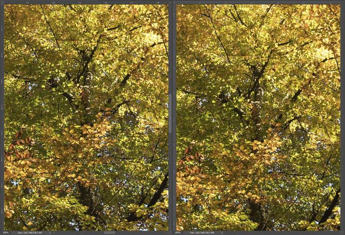Nikon 14-24mm vs. Sigma 14mm ART, Bildausschnitt Mitte