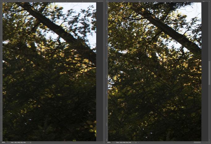 Nikon 14-24mm vs. Sigma 14mm ART, Bildausschnitt Mitte Rand rechts