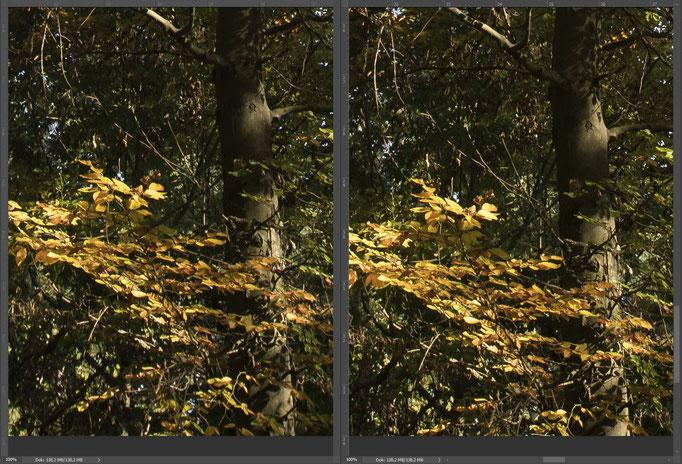 Nikon 14-24mm vs. Sigma 14mm ART, Bildausschnitt Mitte Rand unten