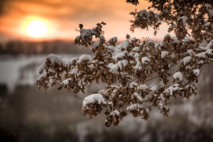 Winterliche Stimmung im Wald bei Kloster Weltenburg.