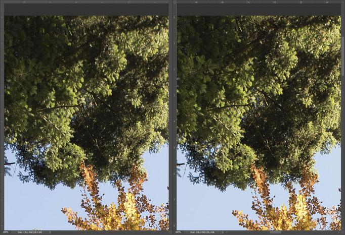 Nikon 14-24mm vs. Sigma 14mm ART, Bildausschnitt Mitte Rand oben