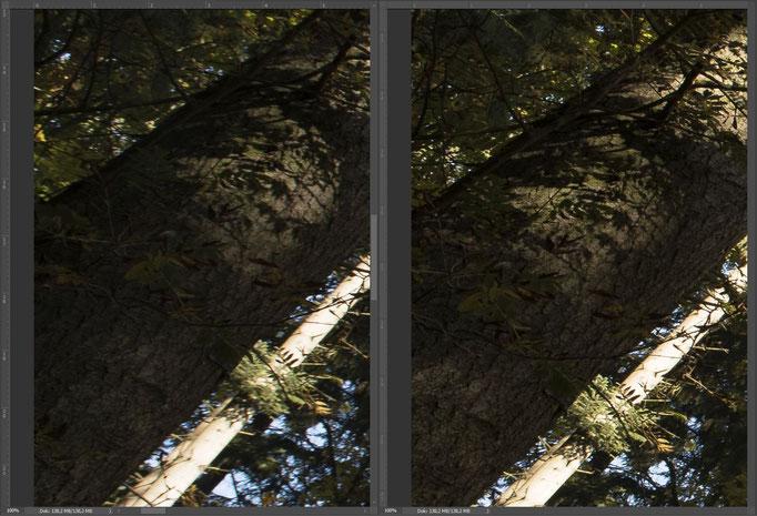 Nikon 14-24mm vs. Sigma 14mm ART, Bildausschnitt Mitte Rand links