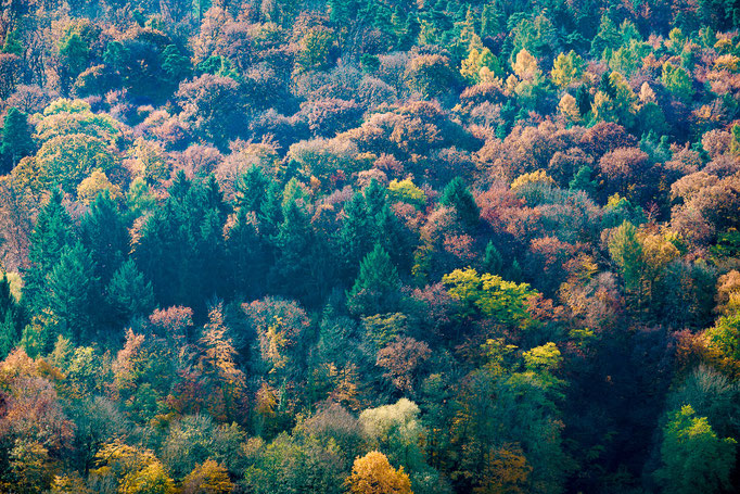 Wald in Herbstfarben