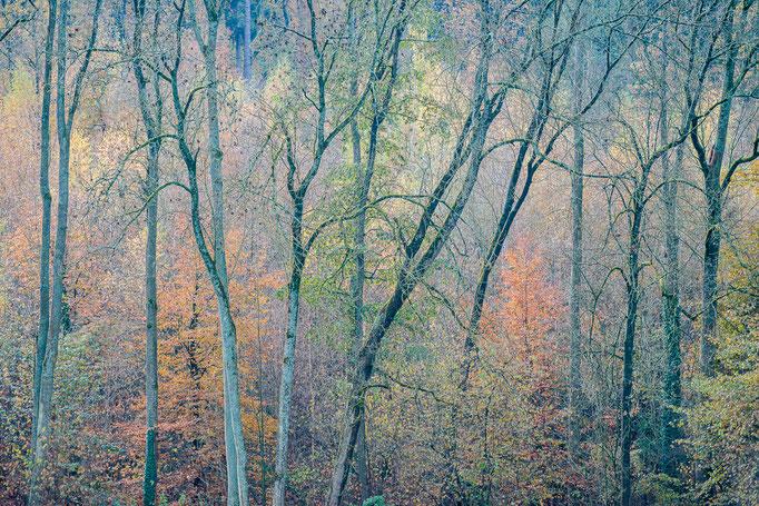 Woods in fall, Degerloch near Stuttgart