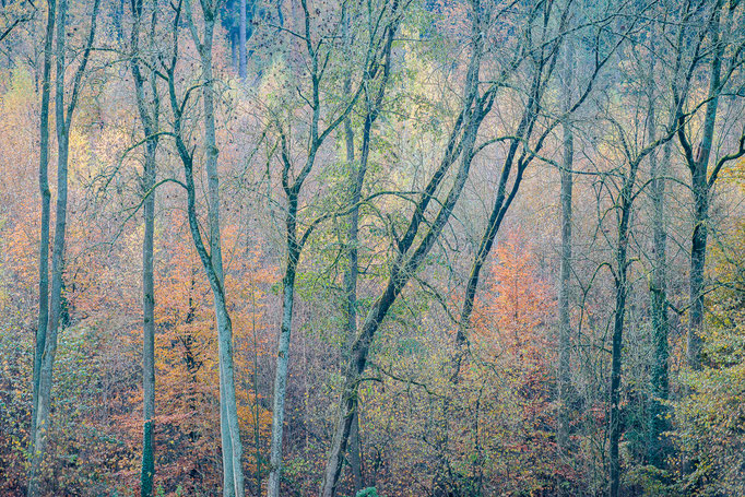 Woods in fall, Degerloch near Stuttgart