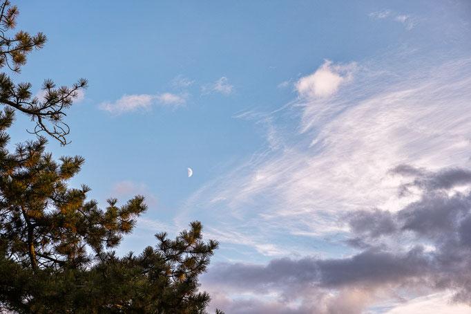 Mond und Wolken über Kiefer