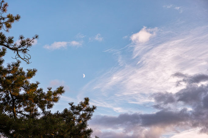 Moon and clouds over pine tree