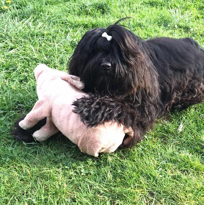 und auch Indira liebt das IKEA Schweinchen wie unser Im-chi :-)