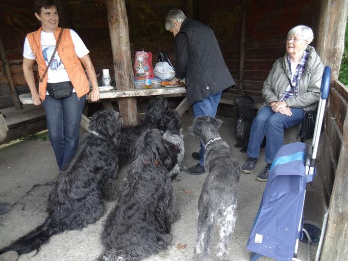 Hundepicknick 2