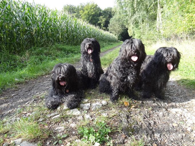 Familienbild mit Herr - Esteban, Lucie, Adele, Biene