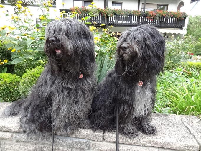 Esteban und Lucie, die Rackervertretung
