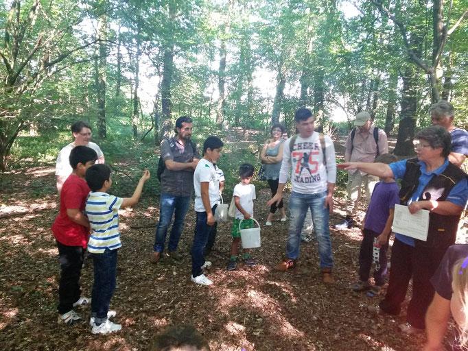 Im Wald  findet sich Material für ein Waldsofa, das Platz  für alle bietet