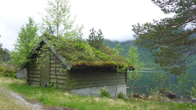 typische Moos/Gras-Dächer