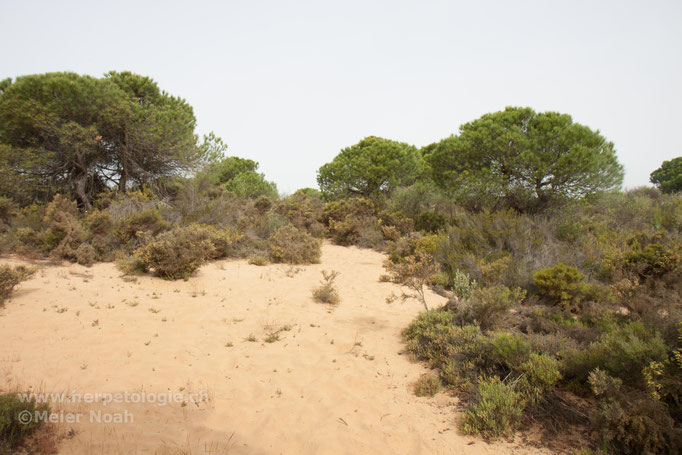 Dünenlandschaft nahe Huelva