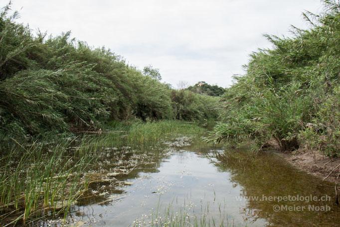 Habitat der Maurischen Bachschildkröte (Mauremys leprosa)