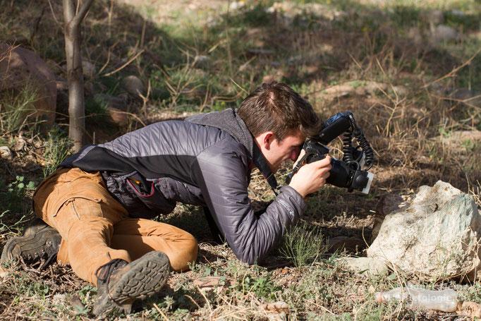 Beim Fotografieren eines Saurodactylus brosseti