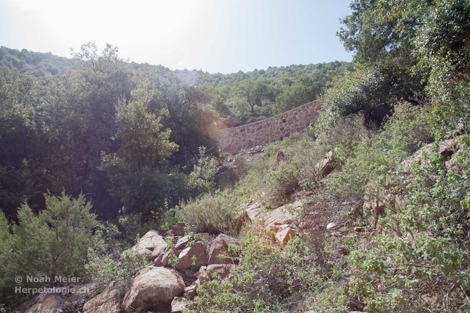 Habitat von Quedenfeldtia moerens