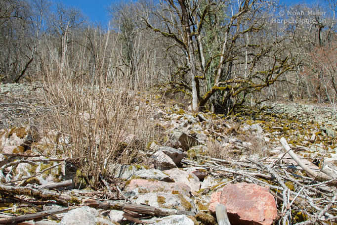 Typisches Aspisviper-Habitat mit grossen Geröllhalden