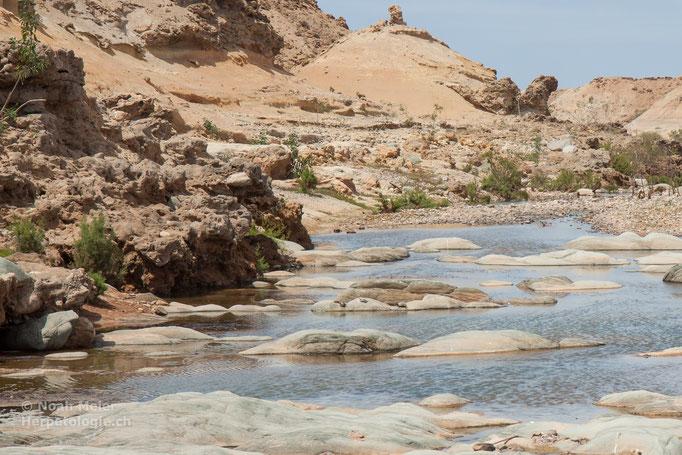 Habitat von Mauremys leprosa (im Hintergrund auf Steinen sitzend)