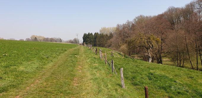 EifelSchleife - Eickser Busch