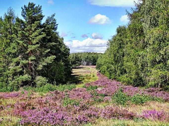 Schavener Heide August 2020