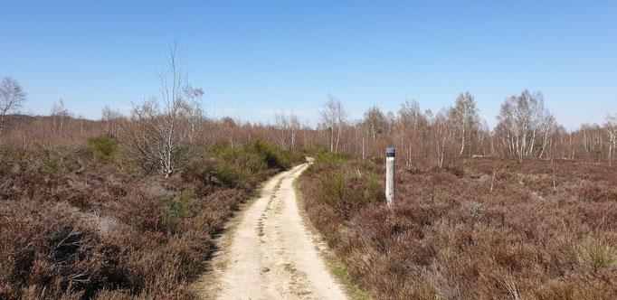 Drover Heide im März