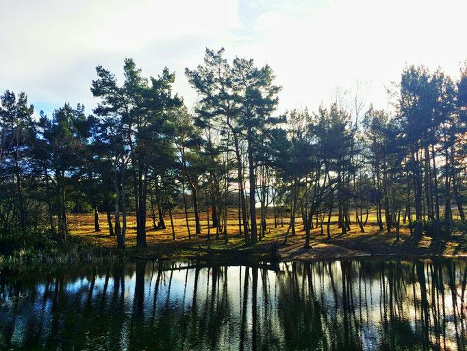 Schavener Heide - Dezember
