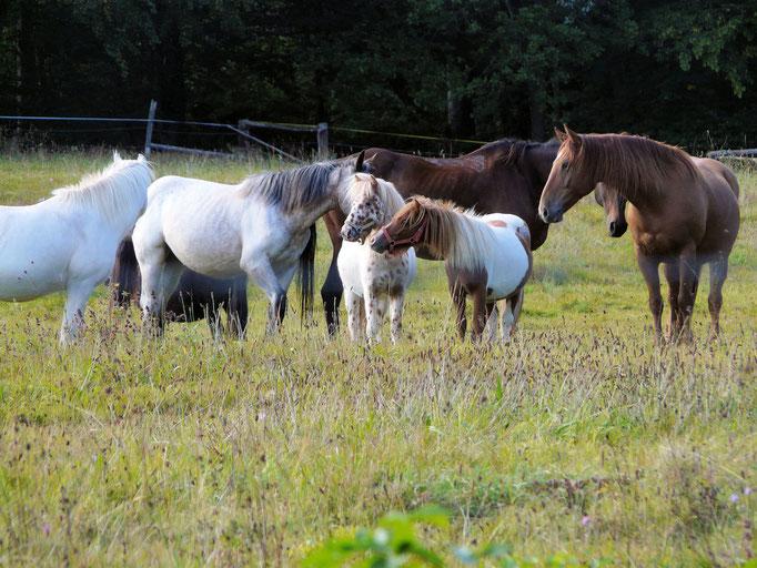 Pferdeversammlung