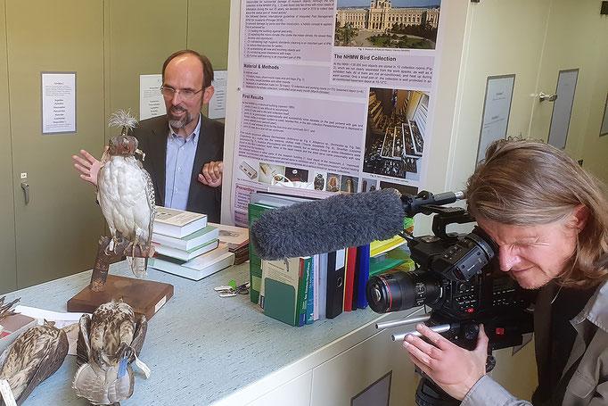 Dreharbeiten im Naturhistorischen Museum Wien / Filming in Vienna's Natural History Museum