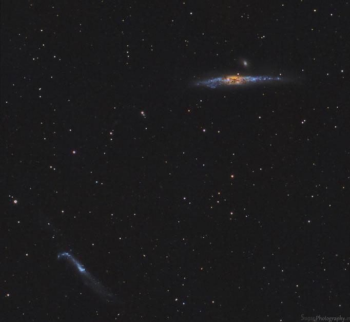 Walgalaxiie (NGC4631) + Hockeyschlägergalaxy (NGC 4656) im Sternbild Jadhunde. Entfernung 30 Mil. Lichtjahre Aufgenommen am 20.3.15