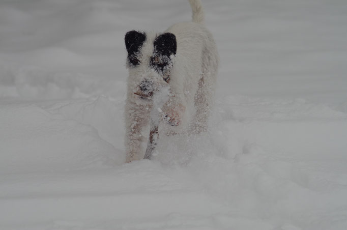 Snowdog :)