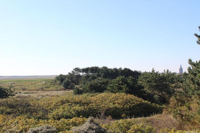 Inseltraum Weitsicht grüne Gräser