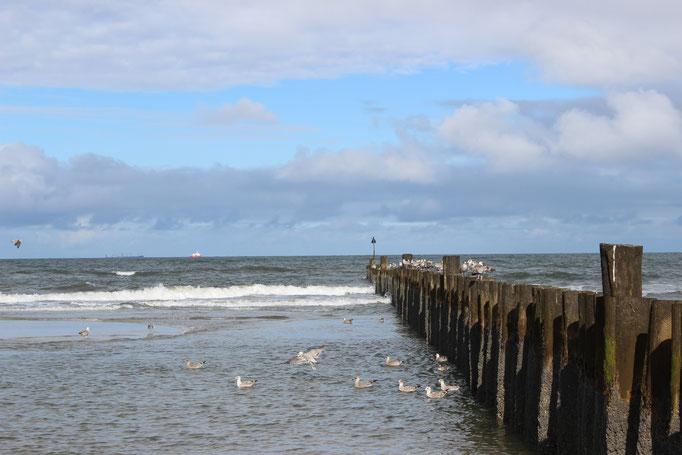 Wellenbrecher mit Seevögeln Möwen