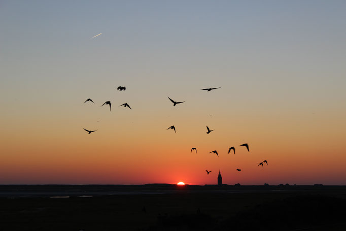 Westturm im Sonnenuntergang Abendstimmung mit Vögeln