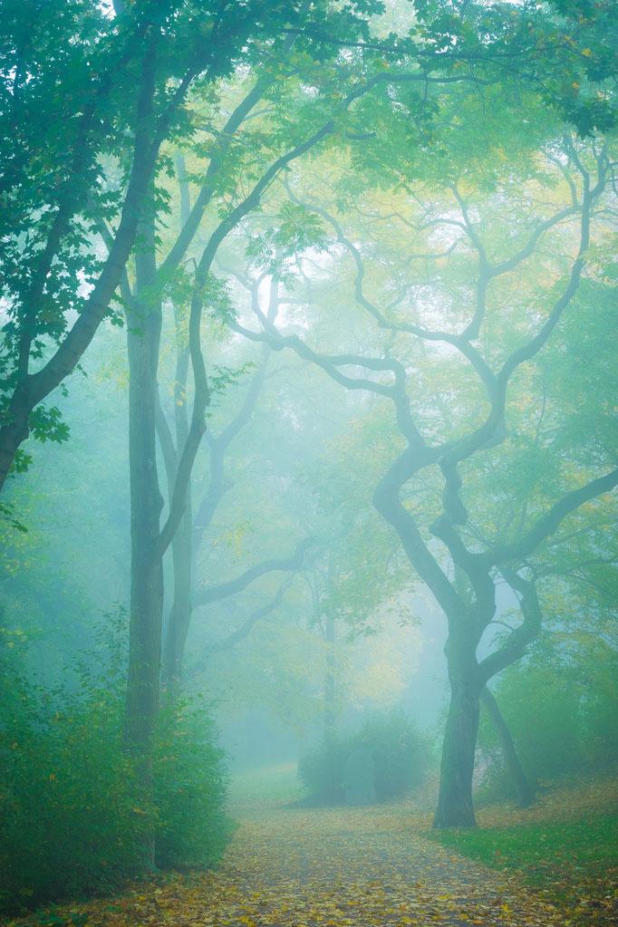 Reichardts Garten im Nebel