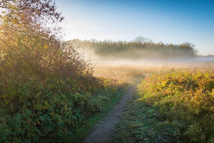 Weg am Kanal im Herbst